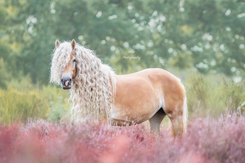 ゴクリ馬界のラプンツェルの見た目がゴージャスすぎると話題に